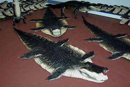 alligator rug - rugs ideas